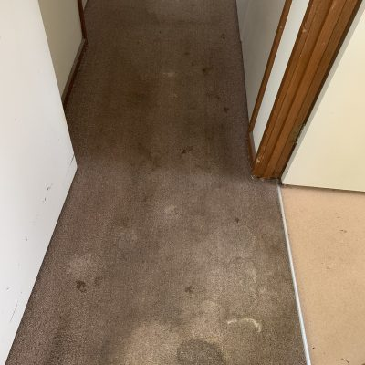 Carpet Steam Cleaning - Before